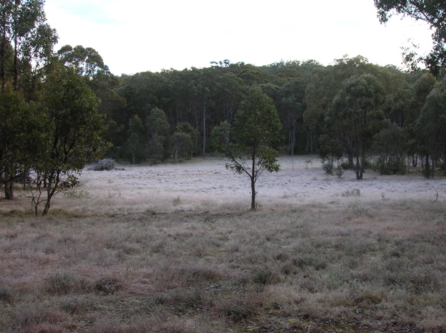 Frost in the west paddock
