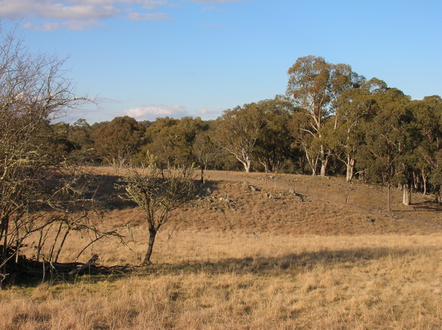 Our creek paddock - and possibly the site of the original hut