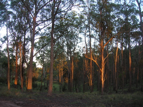 Sunrise in the bush 2