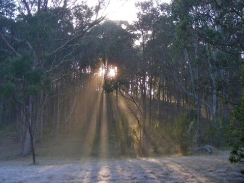 Sunrays through morning mist
